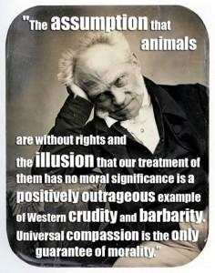 Schopenhauer Animals